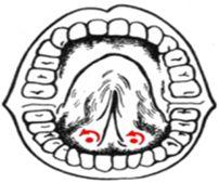 логопедичний масаж фото
