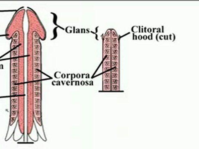 збільшення пеніса
