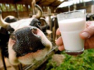 Чи можна пити молоко при отруєнні