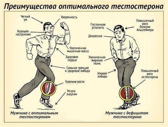 Тестостерон як підвищити